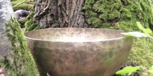 Klankschaal aan de voet van boom mos
