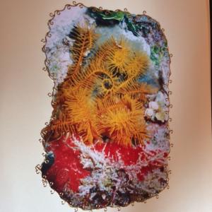 Fetherstar Cozumel rif onderwater
