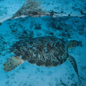 rif onderwater GreenTurtle Cozumel