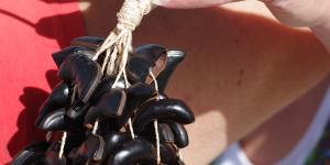 Kabalonga instrument hand Karoline arm ander
